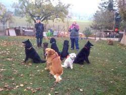hundetraining zu hause mit jörg